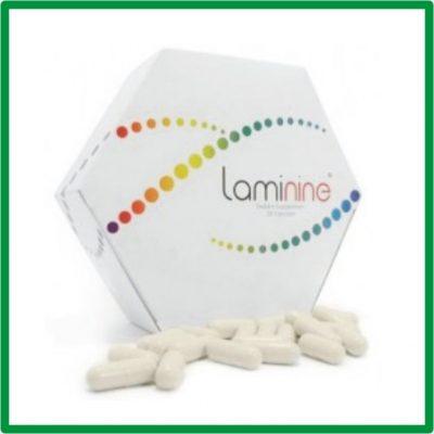 3.Laminina